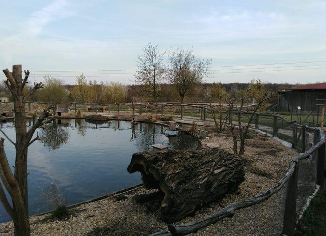 Malý rybníček v Zooparku Milíčov