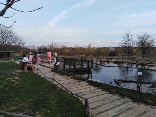 Pohled na vodní plochu v Zooparku Milíčov