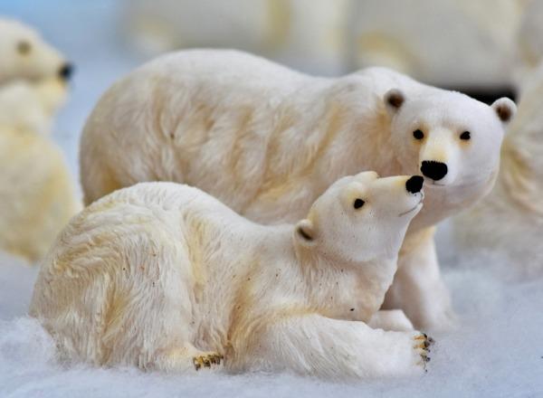 Mezinárodní den ledních medvědů v Zoo Praha
