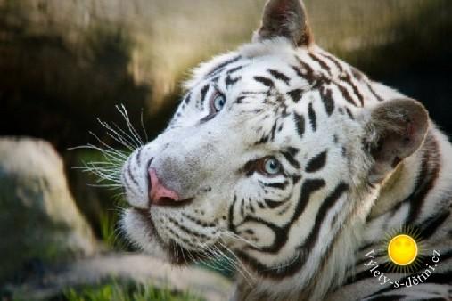 Liberecká zoo zve k návštěvě